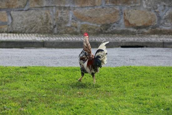 galinhas (04)fev18-PNS