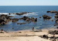 Programa Bandeira Azul está de regresso às praias para sensibilizar os mais novos a preservar a biodiversidade
