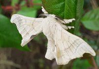 Em escola de Ovar: criação de bichos-da-seda ajuda na melhoria de aprendizagens…