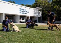Cães e gatos no Porto não tiram férias e esperam por uma adoção responsável