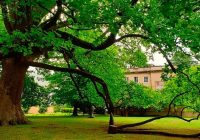 "Tulipeiro dos Jardins da Casa Allen prestes a ser ""árvore de interesse público"""