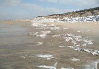 """Bloco denuncia """"atentado ambiental"""" na Praia da Estela (Póvoa de Varzim) e pede esclarecimentos ao Governo"""